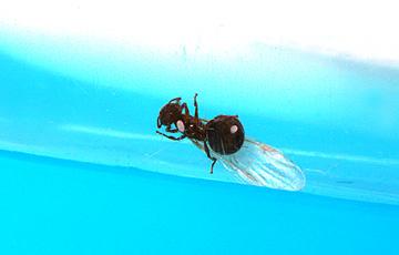 ant_4763.jpg