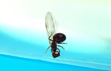 ant_4773.jpg