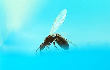 ant_4807.jpg