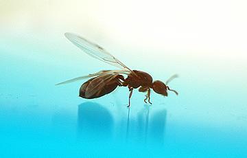 ant_4812.jpg