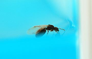 ant_4815.jpg