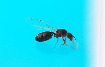 ant_4820.jpg