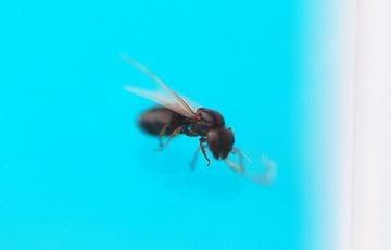 ant_4821.jpg