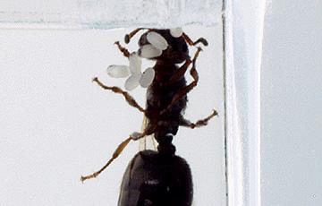 ant_4829.jpg