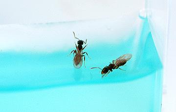 ant_4841.jpg
